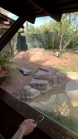 Got A Little Naughty At The Zoo ?