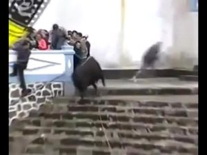 The Spirit Of These Animals