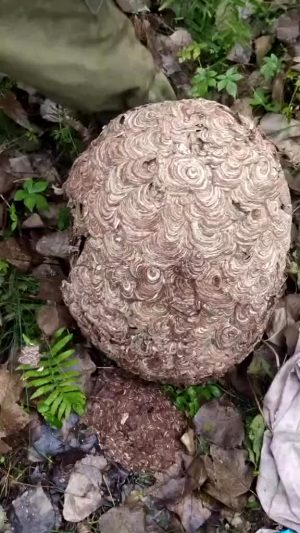 Wasp Nests Are My Ultimate Trigger